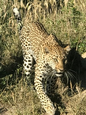 Inyati Private Game Reserve Photo