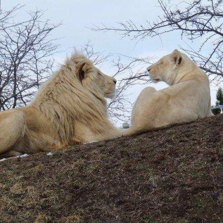 Toronto Zoo : photo2.jpg