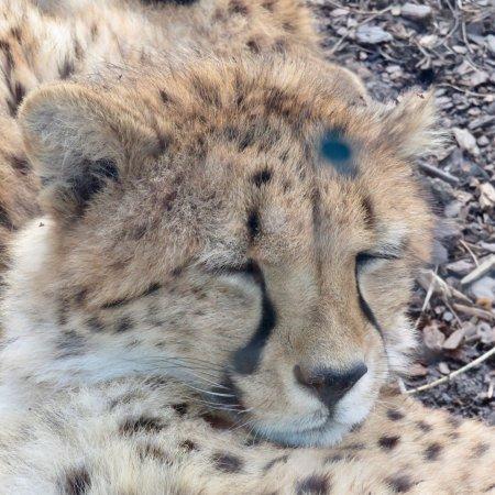 Toronto Zoo : photo3.jpg