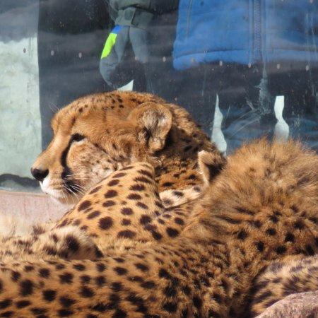 Toronto Zoo : photo4.jpg