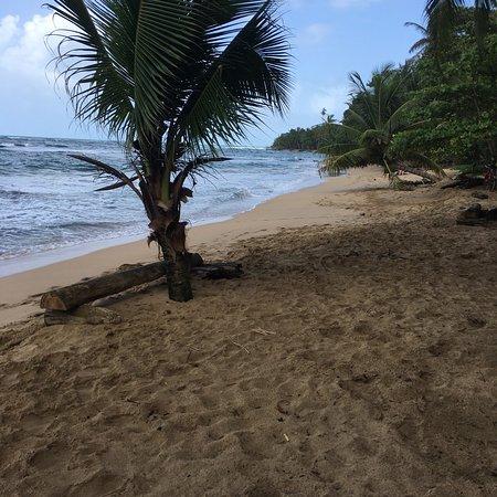 Punta Uva, Costa Rica: photo1.jpg