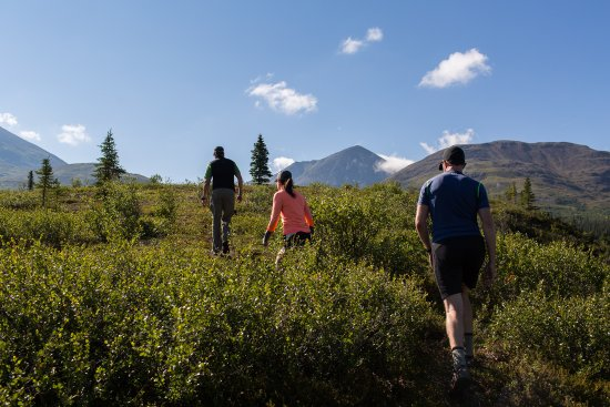 Denali National Park and Preserve, AK: Book a group or private day hike to learn how to navigate off trail terrain. Hike like an Alaska