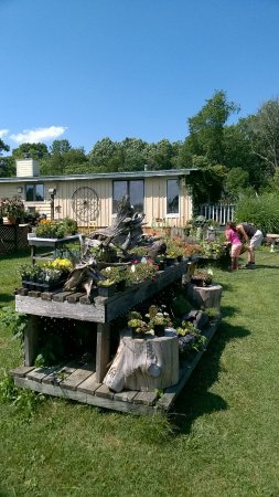 Barboursville, VA: Plants, gifts, antiques and crafts on a Virginia farm.