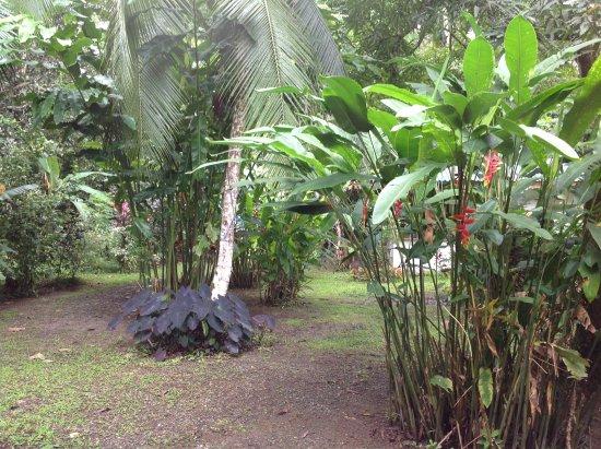 Cahuita, Costa Rica: Paradies rund ums Gästehaus