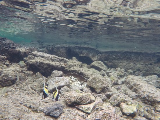 Unter wasser picture of kapoho tide pools pahoa for Hawaii tides for fishing