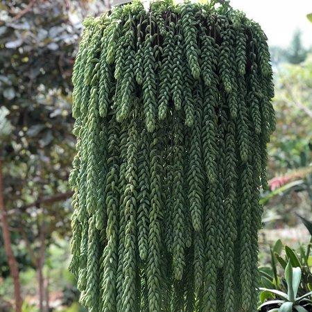 Vallarta Botanical Gardens: photo0.jpg