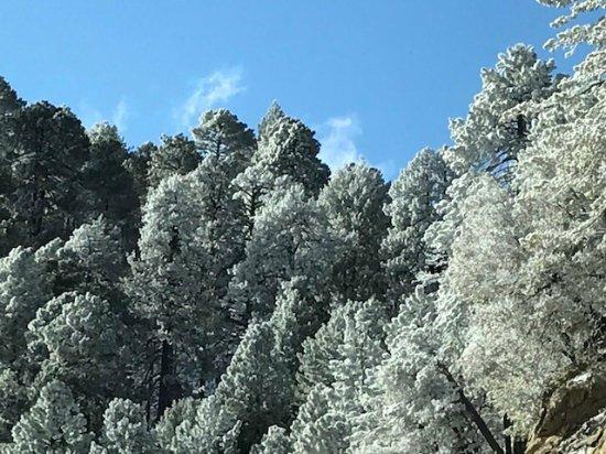 Mt. Lemmon Scenic Byway: photo5.jpg