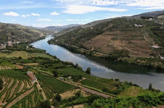 Douro Wine Cruise with lunch on board