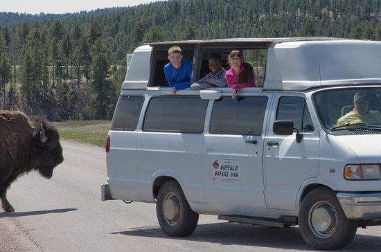 Buffalo Safari Van - Small Group Tour
