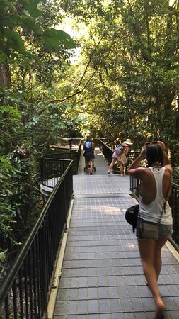 Daintree Region, Avustralya: Mossman Gorge Boardwalk