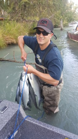 Sockeye salmon on the Kenai river.