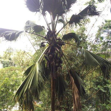 Le Jardin Du Roi Spice Garden : photo3.jpg