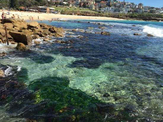 Rose Bay, Australien: Bronte with its gorgeous beach and cafe life