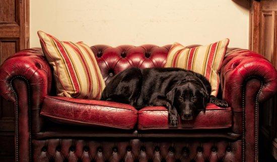 Monty's Inn: Dog friendly pub