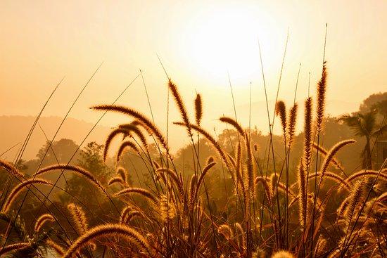Landscape - Picture of Forest Hills at Tala, Raigad - Tripadvisor