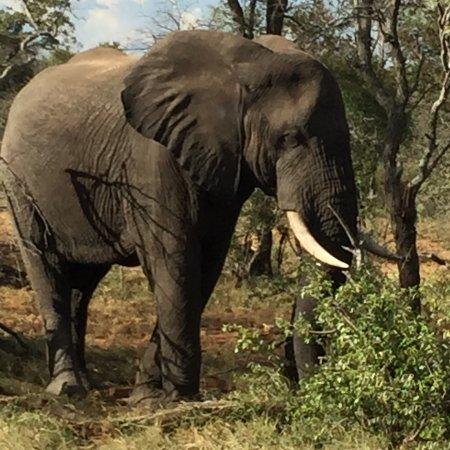 Timbavati Private Nature Reserve, Νότια Αφρική: photo0.jpg