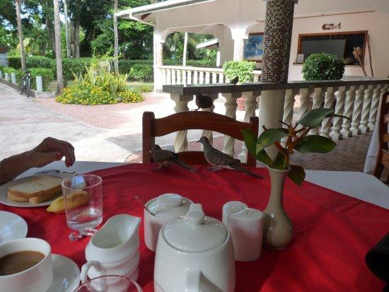 La Passe, Seychelles: les oiseaux au petit-déjeuner