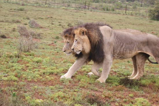 Addo, Sudáfrica: two brothers Melvin and Gibson
