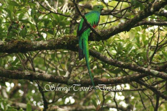 Monteverde Cloud Forest Reserve, Costa Rica: Quetzal