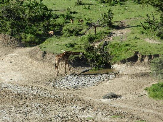 Eagle View, Mara Naboisho: Utsikt frå fellesterassen