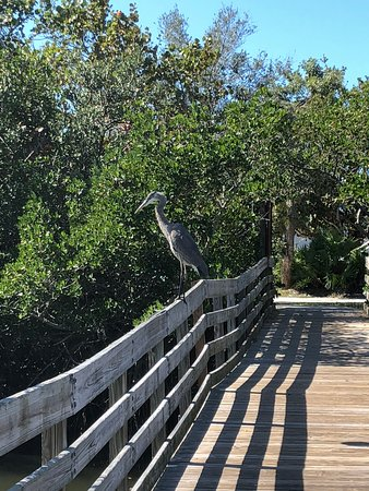 Town Square Nature Park - Parks - Gulf Blvd And 191 St ... |Gulf Shores Town Square