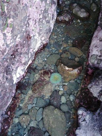 Whale Watch Inn by the Sea: Sea Urchin