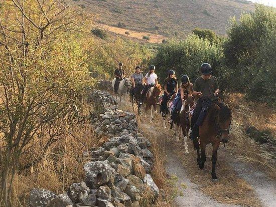 Fourni Horses
