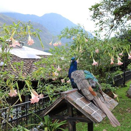 Samari Spa Resort Ecuador