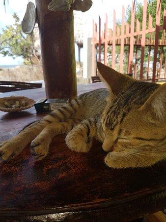 Popoyo, Nicaragua: 20180212_091313_large.jpg