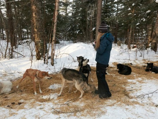 Ely, MN: playing with the dogs