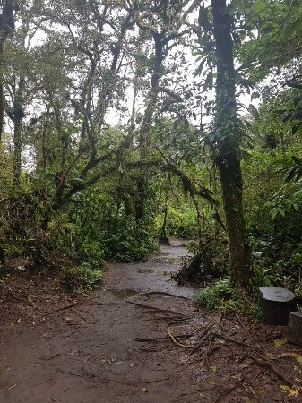 Tenorio Volcano National Park, Costa Rica: 20180216_102601_large.jpg