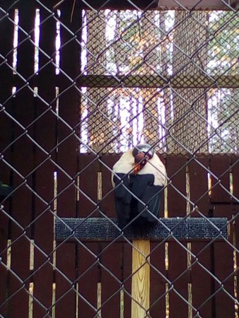 Carolina Raptor Center: IMG_20180221_123046_large.jpg