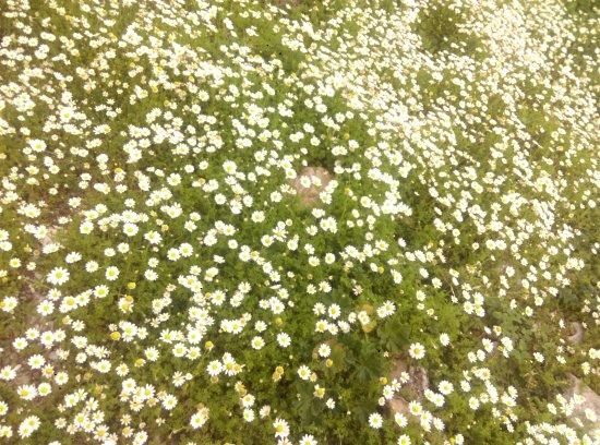 Antalya Province, Turquia: Kış Baharı vardı Antalya'da. Aylardan Şubat...Manzara Bahar.