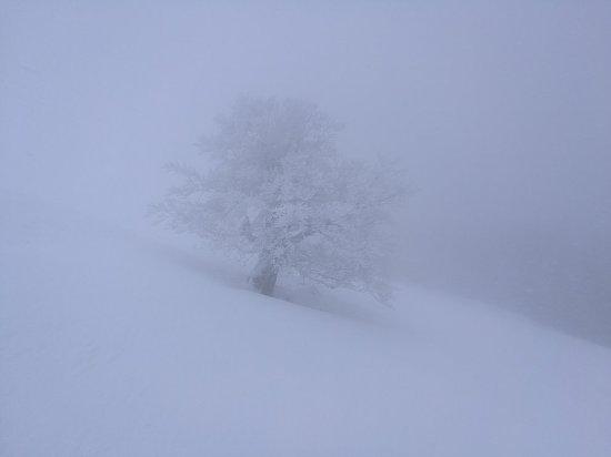 Bergbahnen Dreilaendereck: Winter wonderland