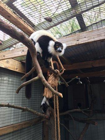 ZooWorld Zoological Conservatory: Lemurs