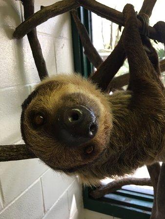 ZooWorld Zoological Conservatory: Sloth