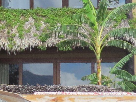 Laguna Lodge Eco-Resort & Nature Reserve Bild