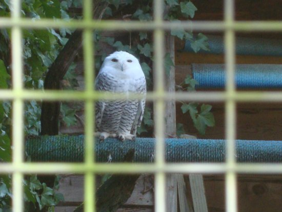 Errington, Canada: Love all the different owls to see