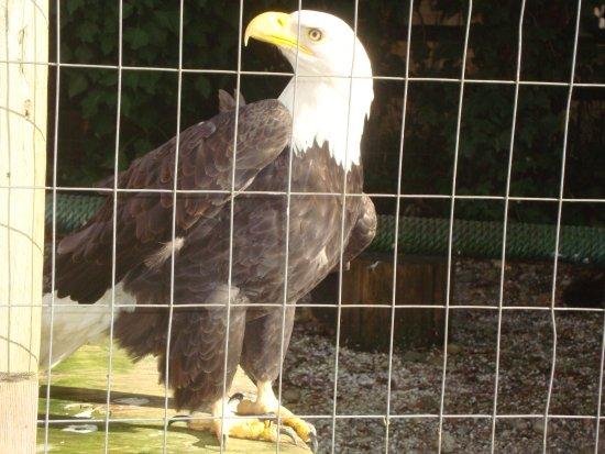 Errington, Canada: Definitely not too shy to pose