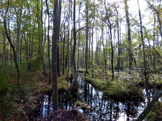 White Springs, Flórida: Swamp