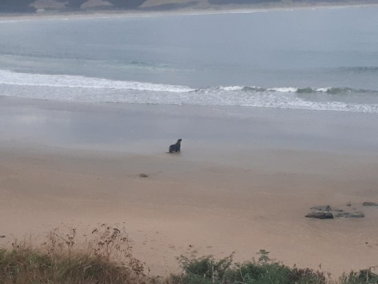 Waikawa, Yeni Zelanda: One of the many visitors hanging out at the beach