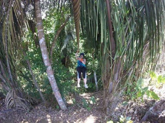 Chiclets Tree Zipline : chant2_large.jpg