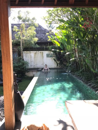 Luwak Ubud Villas: Private lap pool