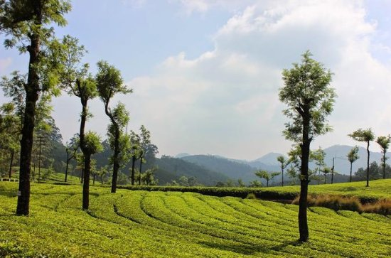 7 Days Serene Kerala Package - Private