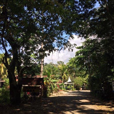Playa Matapalo, Costa Rica: photo2.jpg