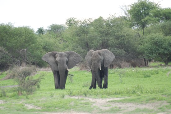 Makgadikgadi Pans National Park, Botsuana: Viele Elefanten!
