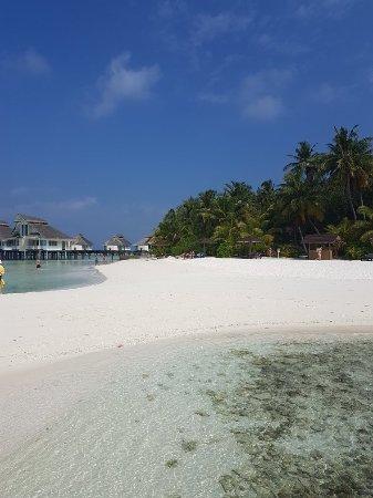 Ellaidhoo Maldives by Cinnamon: 20180218_050802_large.jpg