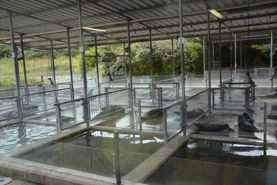 Seehundstation und Waloseum