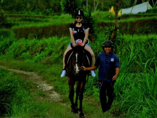 Ubud Horse Stables: Horseback Riding
