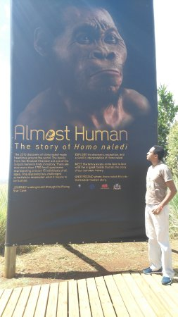 The Cradle of Humankind: A poster of the Homo naledi